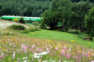 friesl-_waldbahn-im-fruehling
